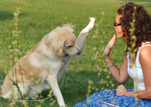 FREE picnic blanket from Advance Pet Nutrition