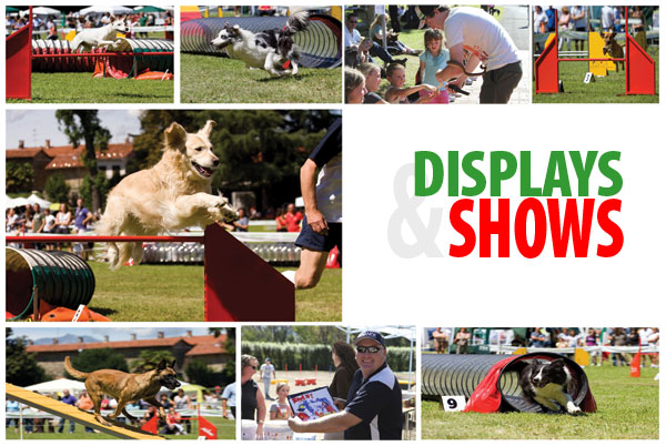 Check out the entertaining shows and demos at Carnival at the Vets 2012, including the fantastic Advance Dog Agility Team.