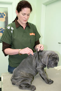 Have your pet microchipped at Carnival at the Vets 2012
