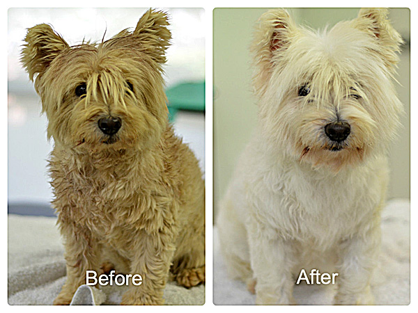 Turner, before and after grooming